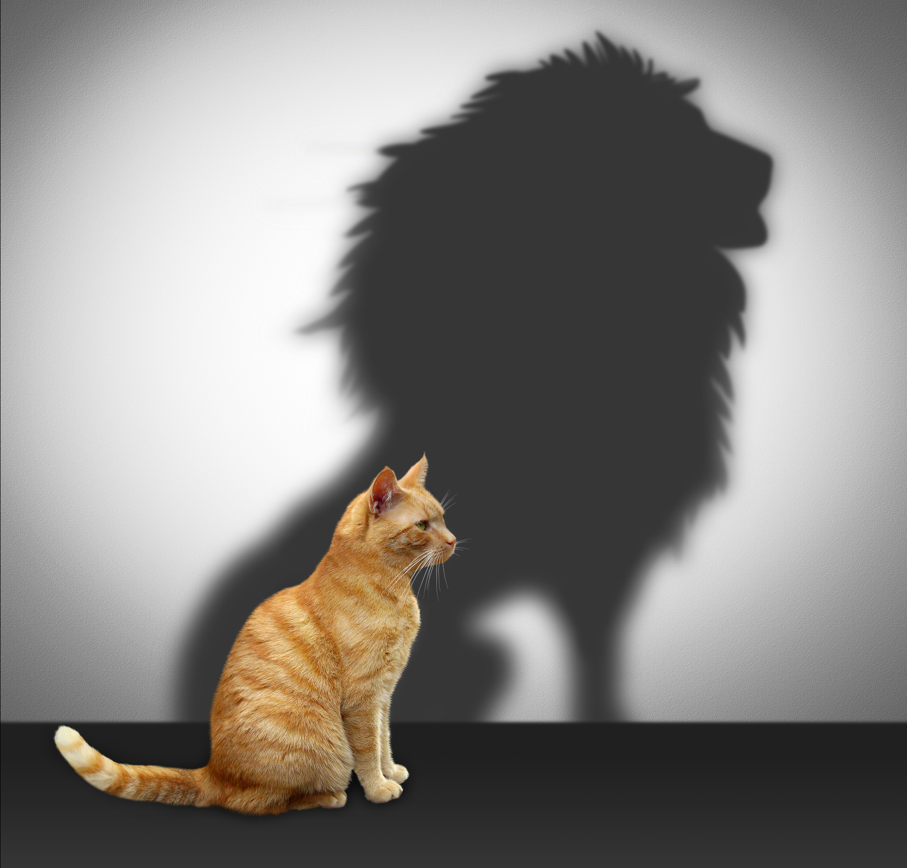 Cat-and-Lion-Shadowcropped.jpg