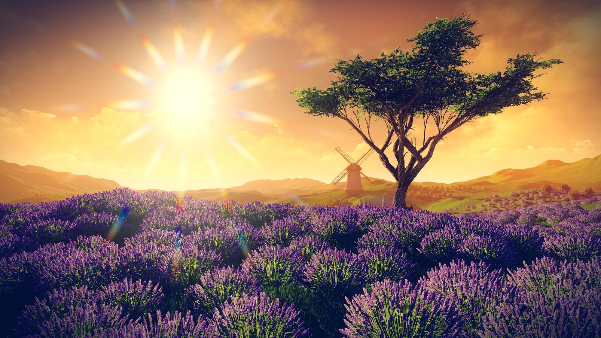 Tree-Alone-in-Lavendar-Field